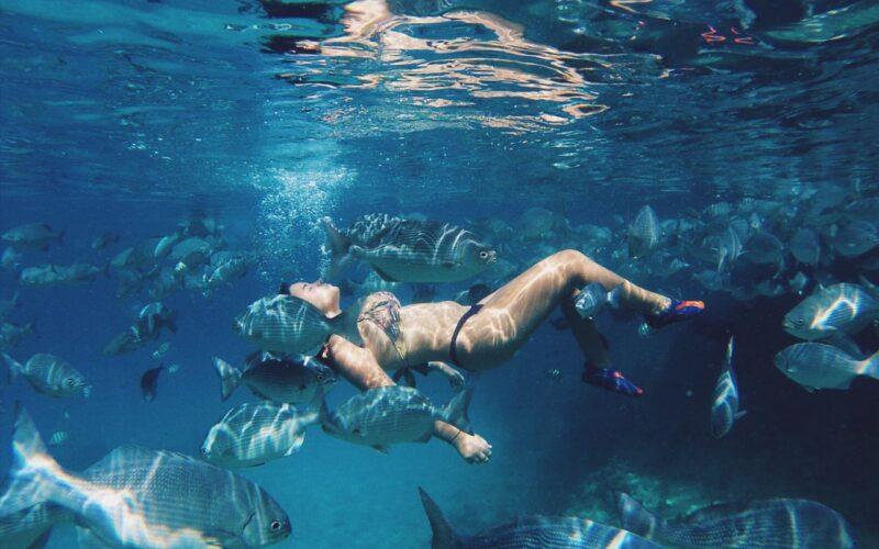 Mergulho com os peixes em West View