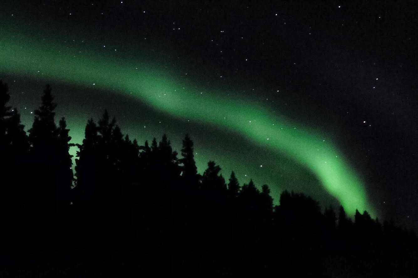 Aurora Boreal em céu estrelado com árvores em Ivalo, Finlândia